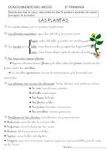 Photo: Las plantas