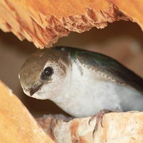 Wary Mom by Denise Parker - Animals Birds ( mommy, birds,  )