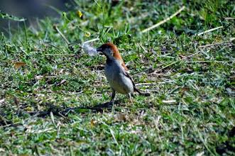 Photo: Sparrow
