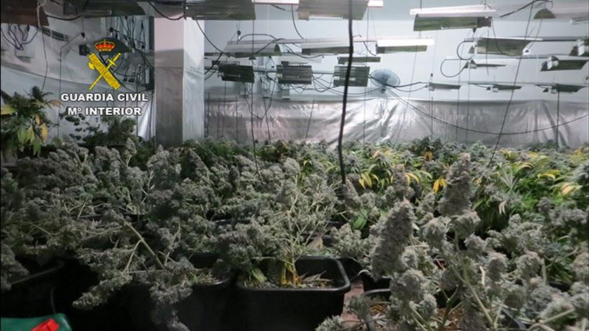 El cultivo se encontraba en un triplex de Huércal de Almería.