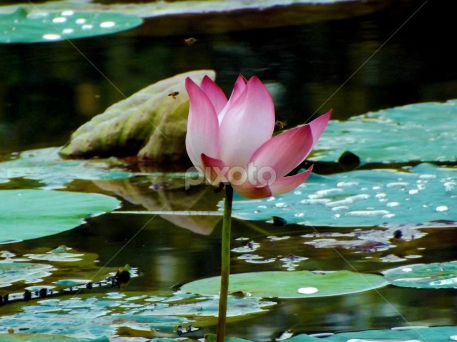 by Sudip Naskar - Nature Up Close Flowers - 2011-2013