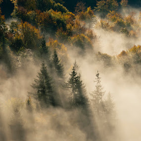 Autumn colors by Rafael Kos - Landscapes Forests ( autumn, forest, morning, mist )