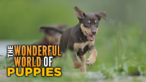 The Wonderful World of Puppies thumbnail