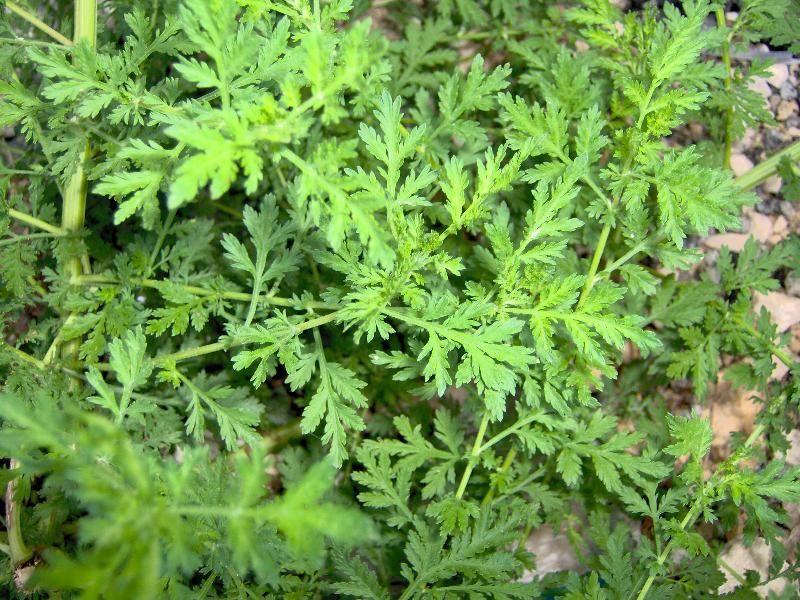 Flora Italiana - Plant...