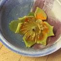 Tulip Poplar, Yellow Poplar, Tulip-tree