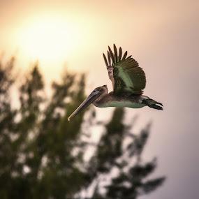 by Projit Roy Chowdhury - Animals Birds ( pwcmovinganimals )