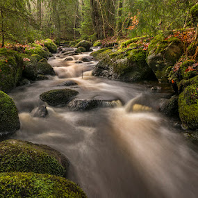 Stream by Peter Samuelsson - Landscapes Forests