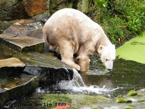 Photo: Hm, im Wassergraben ist wohl auch nichts Interessantes ;-)