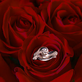Rings and Roses by Terri Schaffer - Public Holidays Valentines Day