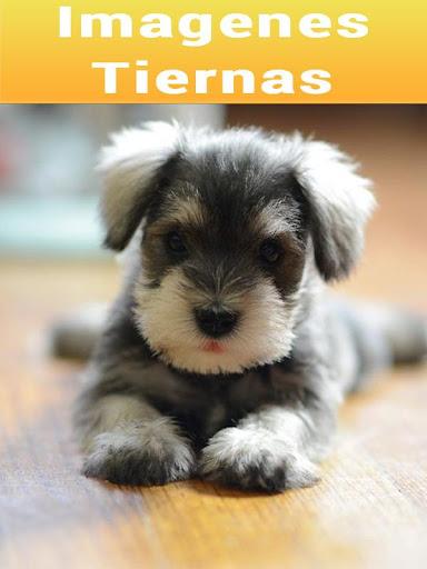 Imagenes Tiernas