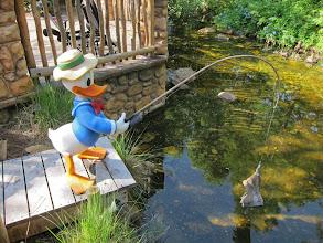 Photo: Donald at Disney Animal Kingdom