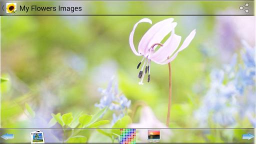私の花の画像
