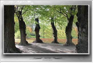 Foto: 2010 11 13 - R 10 10 24 090 - P 108 - im Baumkreis