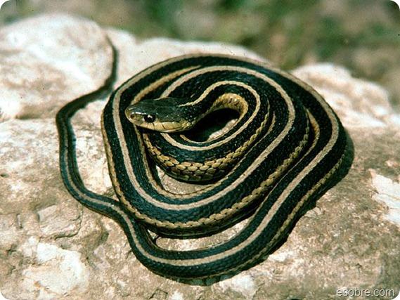 snake_LARGE