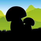 Per funghi a Sassello