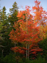 Photo: Bright foliage.
