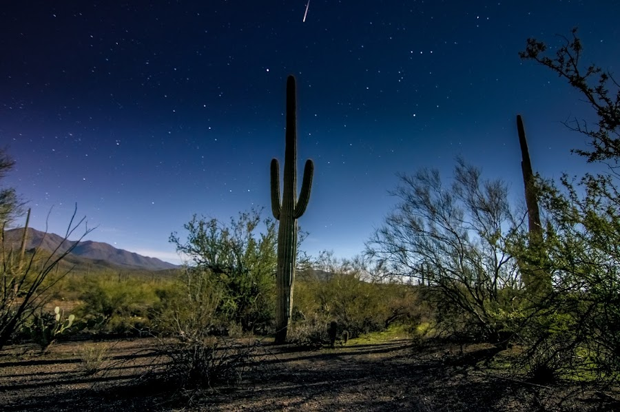 Saguaro Meets Geminid by Ed Mullins - Landscapes Starscapes ( desert, stars, meteor, geminid, saguaro )