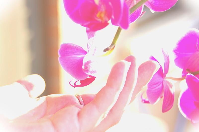orchid di emphoto