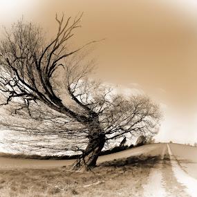 Wind Swept by Becky Wheller - Digital Art Places ( field, hill, tree, path, landscape, lane )