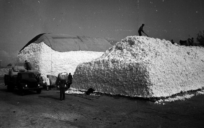 Природе вопреки. История экспериментов СССР над украинскими полями