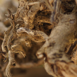 Dead wood study 02 by Erwan Baron - Nature Up Close Trees & Bushes ( dead tree, wood )