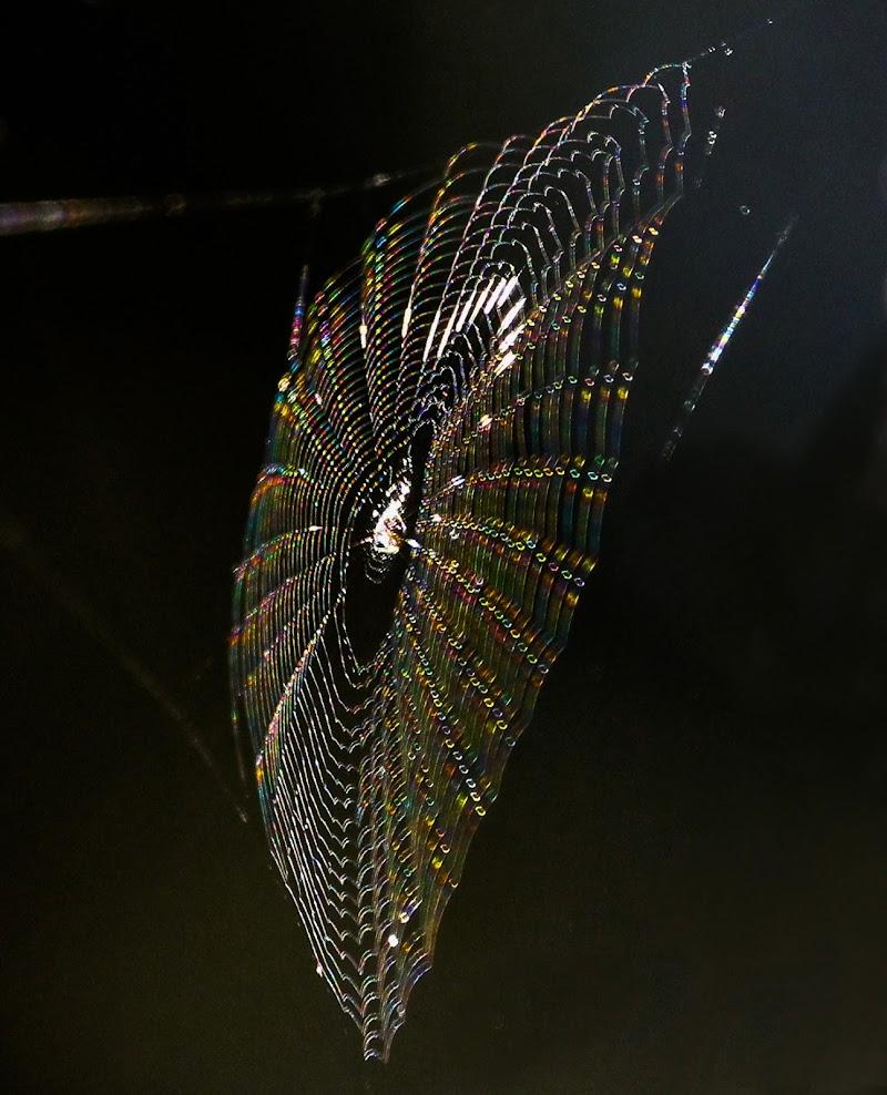 ragnatela colorata dai primi raggi del sole. di ringhio