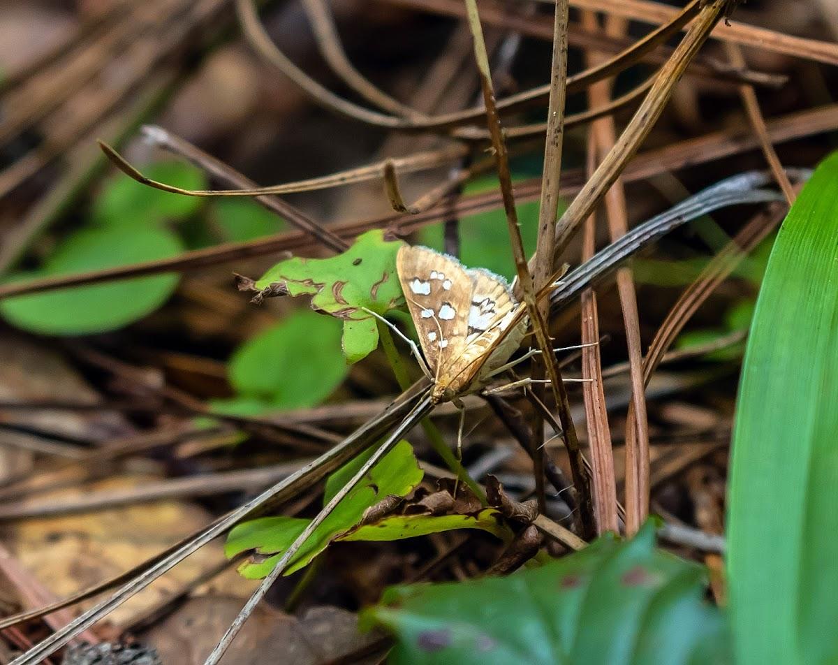 Media Moth