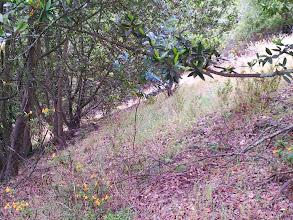 Photo: Eucalyptus seedling