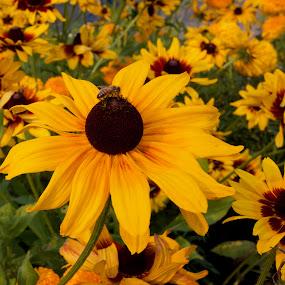 by Chai Hong Kang - Flowers Flower Gardens