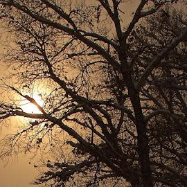 Freezing Hot by Drake Reed - Nature Up Close Trees & Bushes (  )