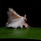 Sack-bearer Moth