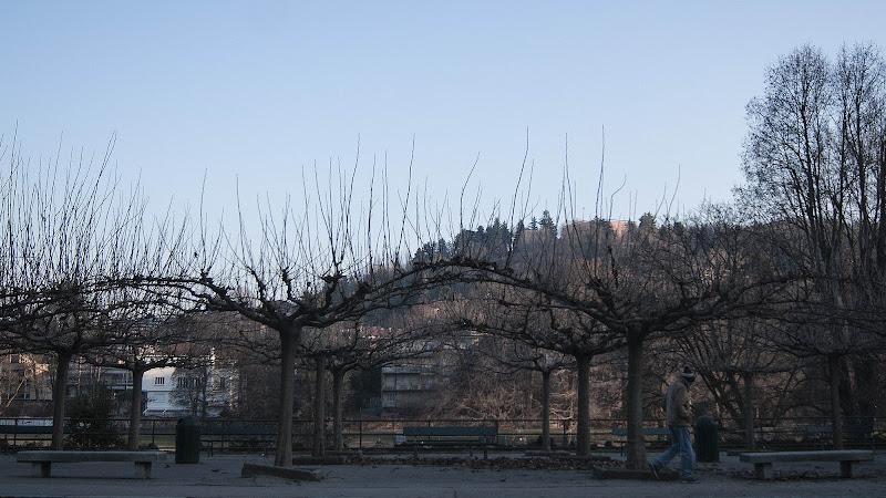 Winter trees di Dario Santo