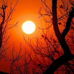 Sunset and branches by Kamal Kamaludin - Landscapes Sunsets & Sunrises ( tree branches sunset landscape background nature plant sunrise sky beautiful light sun summer green sunny travel illustration peaceful grass water scenery tropical scene sea orange peace beauty environment leaf palm )