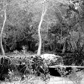 Sundarban by Kingshuk Mondal - Landscapes Forests ( grayscale, sundarban, black & white, sundarban tiger reserve )