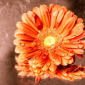 riflessi by Alex supertramp Bukowski - Flowers Single Flower ( fiore, orange, macro, lefotodialex, still life, drop, goccie, riflessi, nikon, photo, photography, flower )