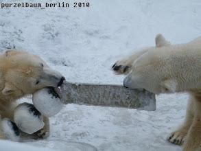 Photo: Tauziehen um das Spielzeug ;-)