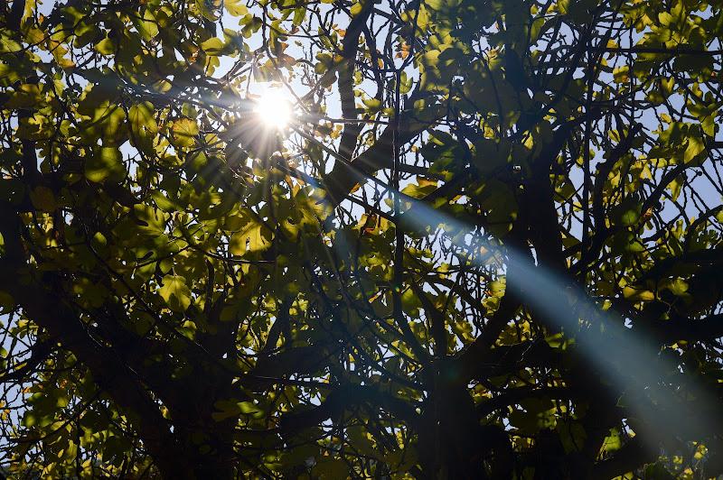 Raggi di sole autunnali di mony29