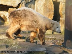 Photo: Knut ist nun wach und inspiziert die Anlage ;-)