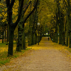 Fall in Paris by Victor Mukherjee - Backgrounds Nature ( paris, autumn, fall, trees, yellow, man )