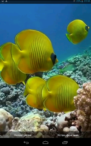 Yellow Fishes Video Wallpaper
