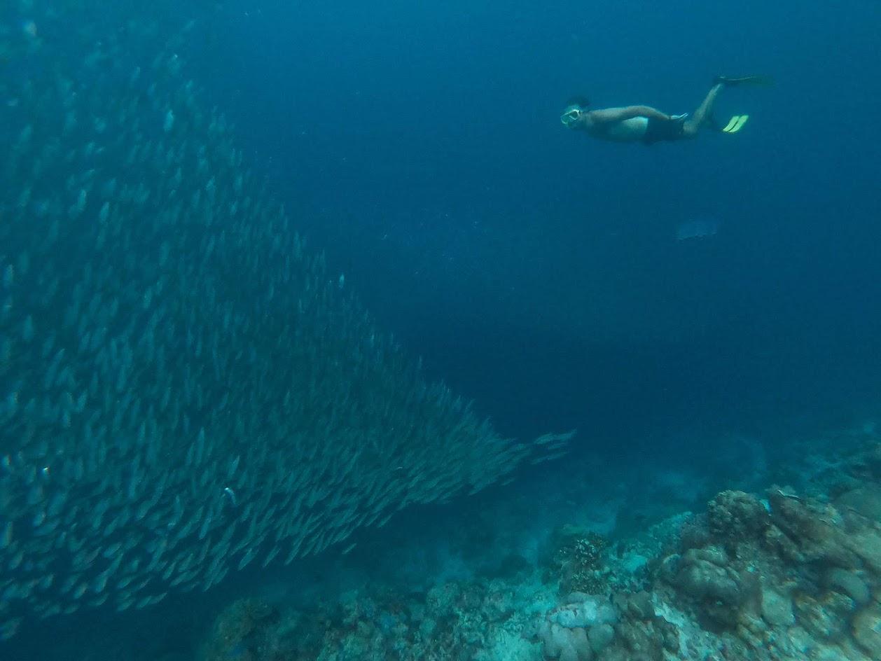 VISITAR CEBU - O que ver e fazer na ilha da aventura, desde Moalboal a Cebu City | Filipinas
