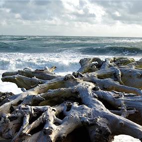 Driftwood on the Beach at Ocean Shores, Washington by Sheri Fresonke Harper - Landscapes Beaches ( washington, driftwood, winter, waves, ocean shores, beach,  )