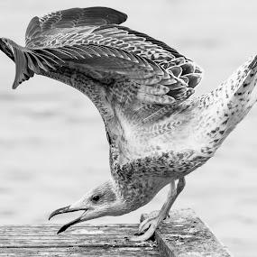 Morning workout by Tom Mehlum - Animals Birds ( animals, depth of field, sea, birds, workout )