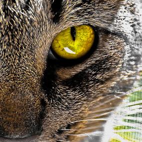 by Grayson Boxx - Animals - Cats Portraits