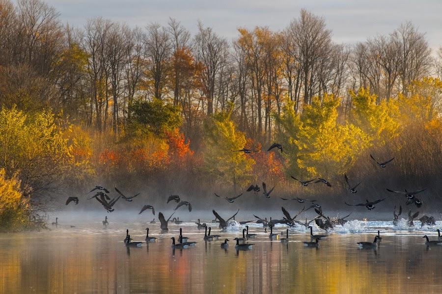 falling in Fall 2018 by Fan Leung - Animals Birds ( fan,  )