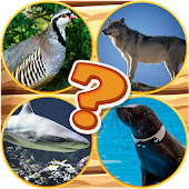 Quiz Pictures Guess The Animal