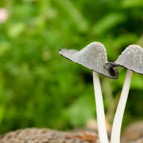 Together.... by Anurag Bhateja - Nature Up Close Flowers - 2011-2013 ( mushroom, macro, fungus )