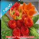 Fruit and Vegetable Garnish (app)