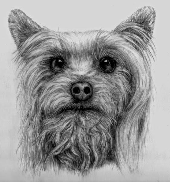 Photo: ritratto cagnolino pencil drawing  Author: Gaston Nicolas Alanis