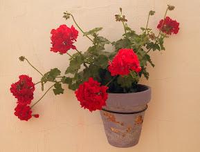 Photo: Mojácar geraniums